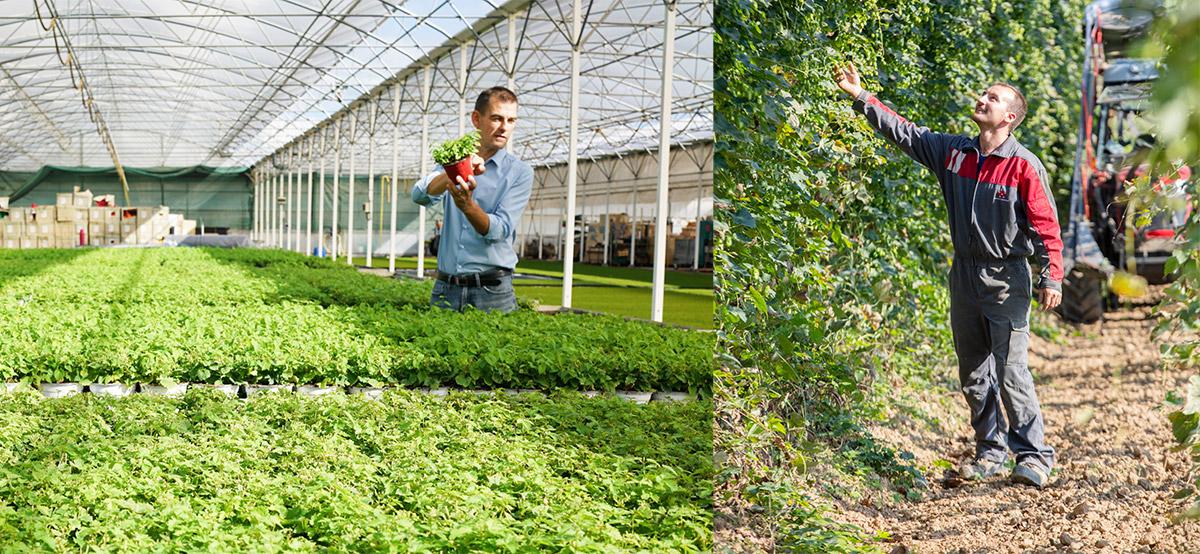 French hop breeding program