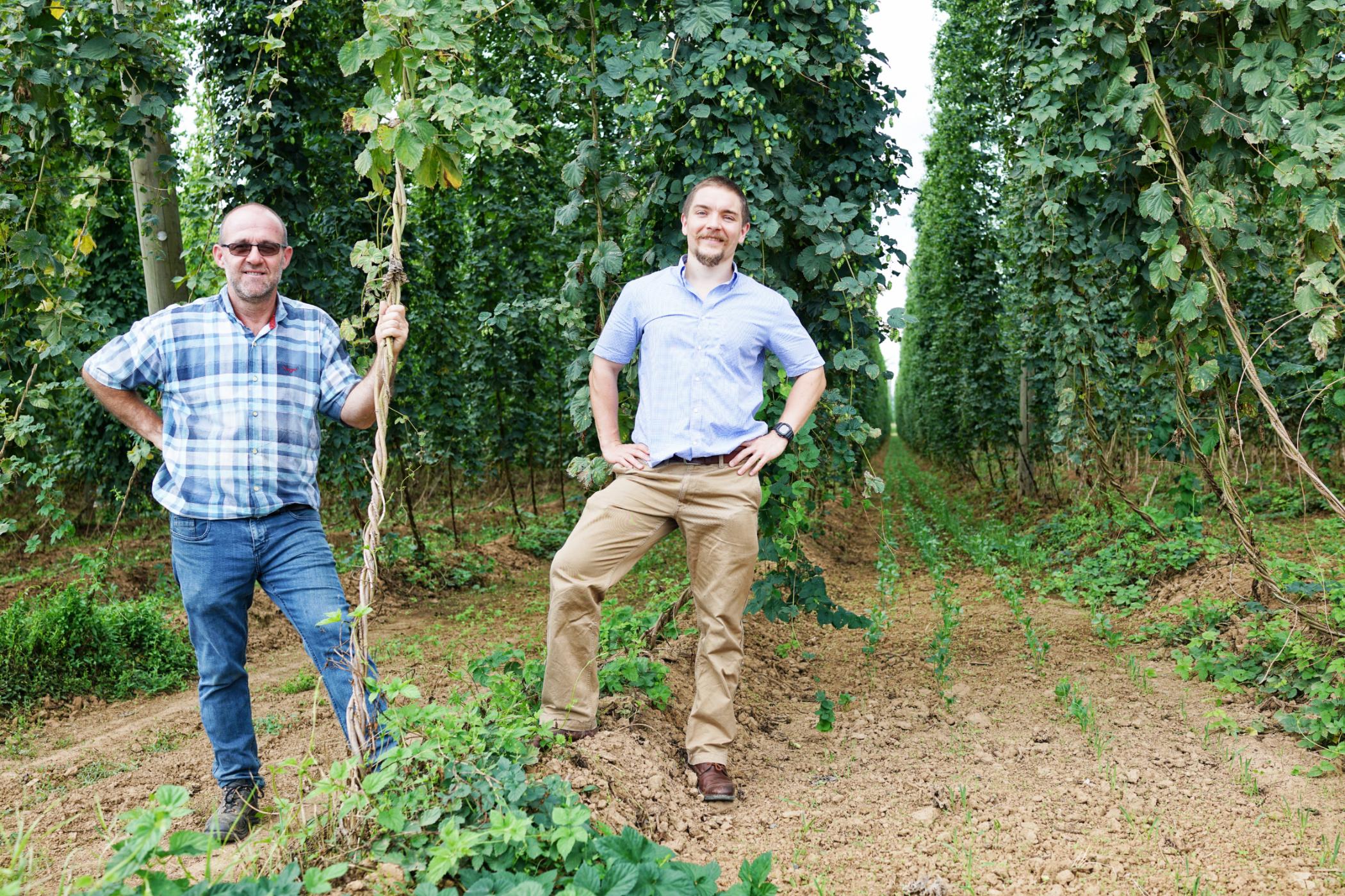 Bio hop garden in Alsace